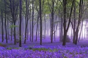 cropped-lavendar-photo41.jpg