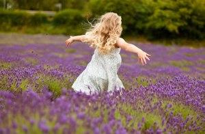 lavender-1603